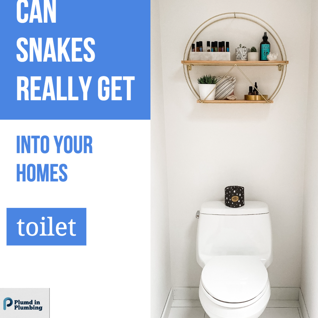 can snakes really get into your homes toilet